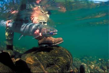 Grand Pa's fish
