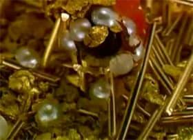 caddis fly jewelry