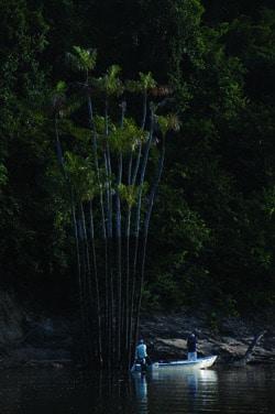 Guyana fly fishing