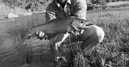 The Provo River used to have some of the largest trout back in the 40's.