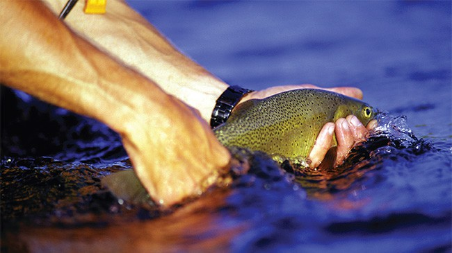 THE FAMOUSLY SLOWTAKING CUTTHROAT.