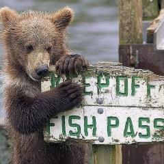 nps bear