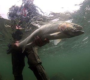 Salmon and Steelhead fisheries are all throughout Pudget Sound.