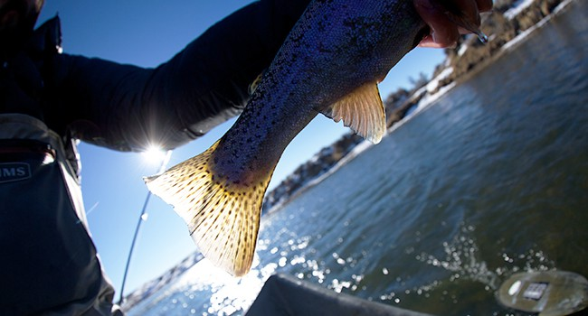Every section of the North Platte system houses different fish.