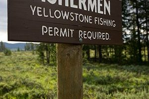 LETTER FROM YELLOWSTONE