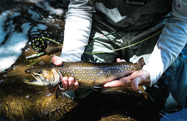WHETHER A DESCENDANT OF STOCKERS OR A NATIVE SON, IT'S STILL ONE BADASS BROOKIE.