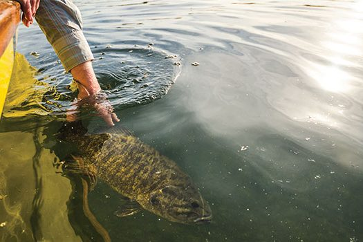 Smallmouth Bass of Mille Lacs Lake.