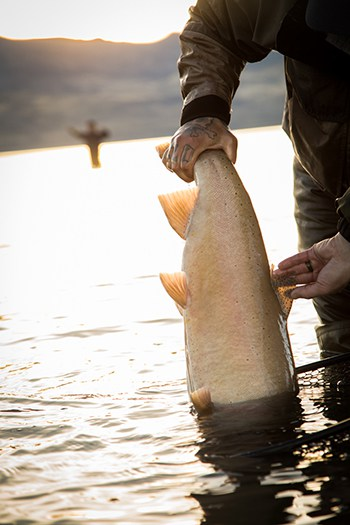 People are always searching Pyramid Lake for Lahontan cutthroat trout.