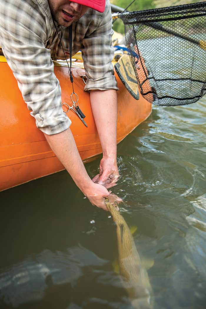 TROUT ARE COMMON ON THE BLACKFOOT.