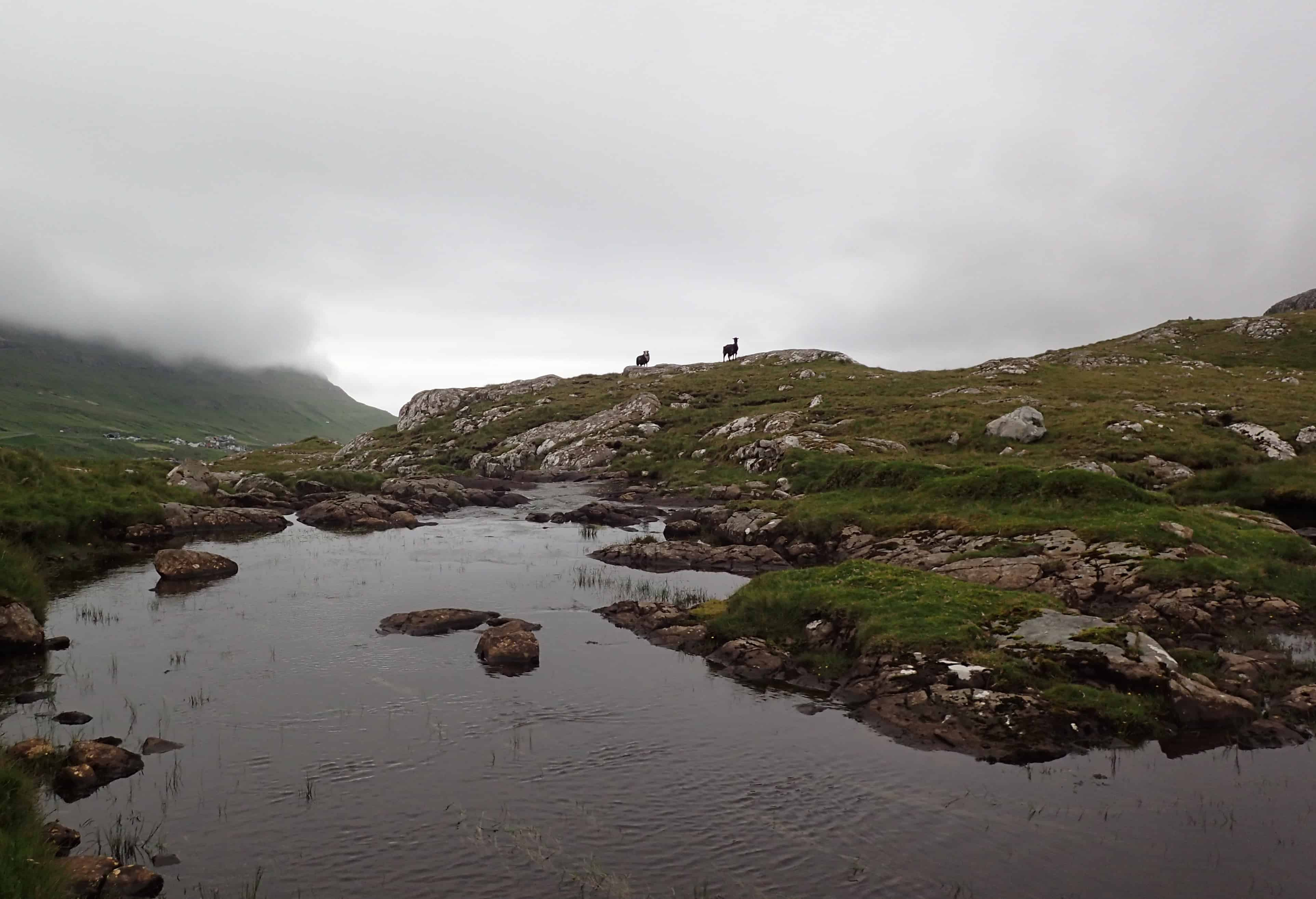The Faroe Islands Flyfishing The DrakeCast Flyfishing Podcast Sheep