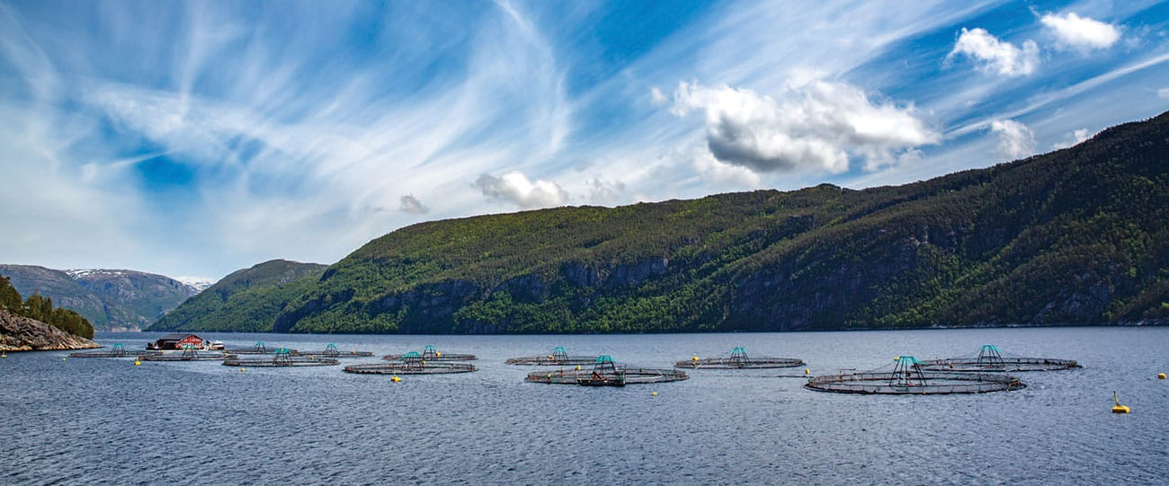 The case against salmon farming