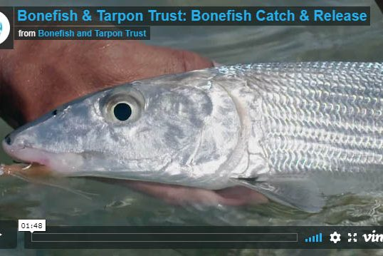 Bonefish Fly Fishing Best Practices