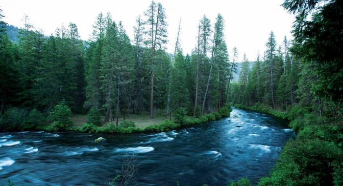 Oregon's Metolius River