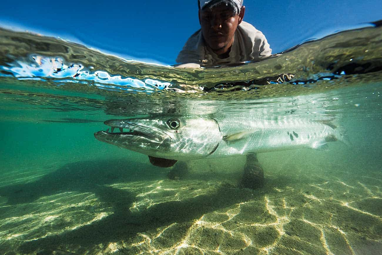 Deron Jackson hoists a nice barracuda he caught from the key. Barracuda is a big part of the guides' diet.