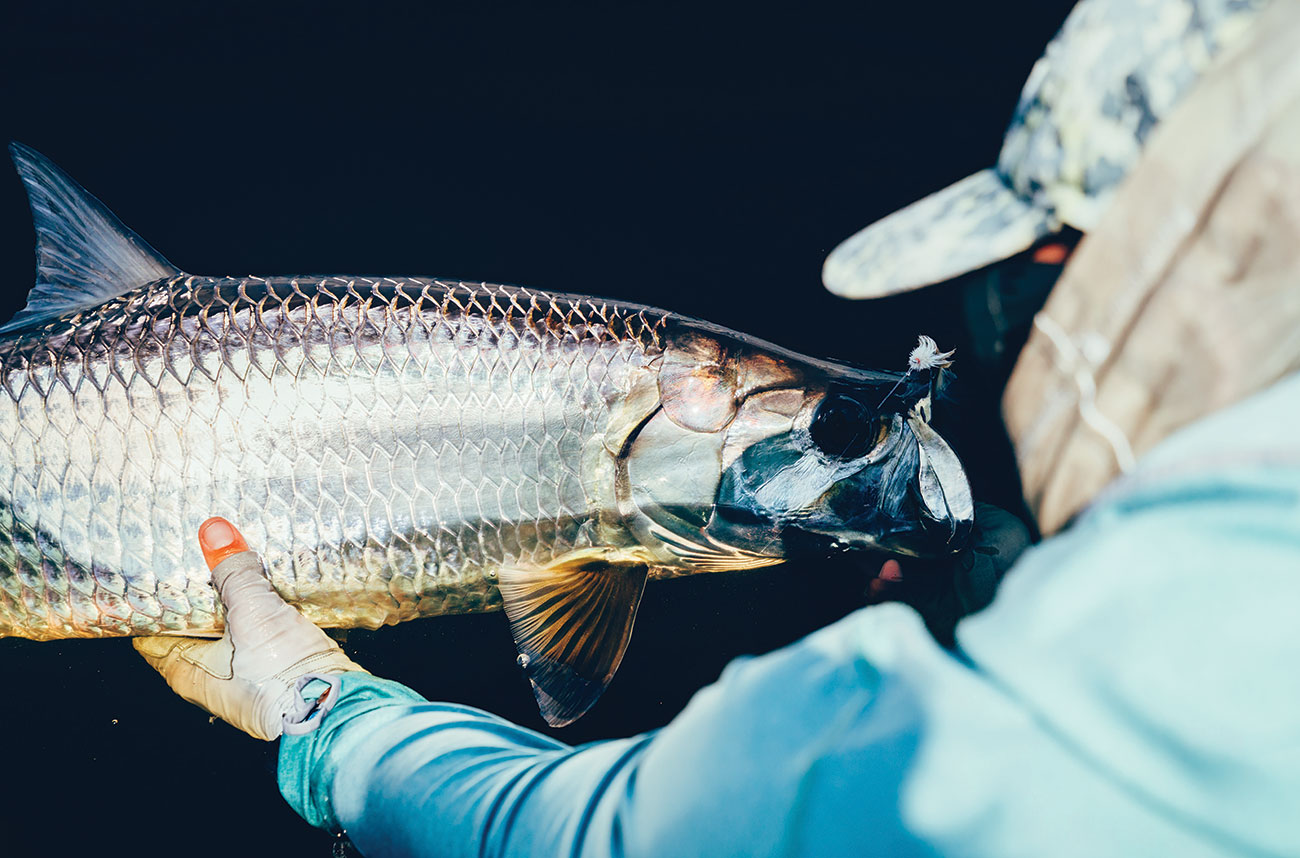 Tarpon on the hunt during Palolo worm hatch.