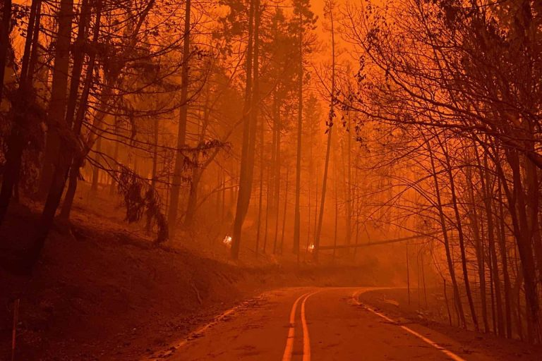 Archie Creek Fire along the Umpqua Hwy (OR 138) Photo taken Sept. 12, 2020.